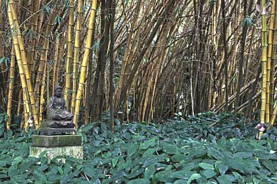 Zen Bamboo Poster