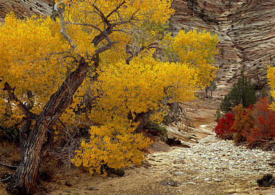 Zion National Park Autumn Poster by Leland D Howard