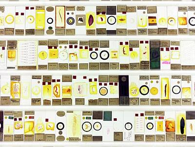 Zoological Microscope Slides Poster