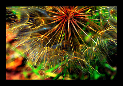 Poster featuring the photograph  Dandelion Dreamtime by Susanne Still