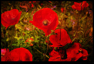 Poster featuring the photograph  Poppies by Beverly Cash