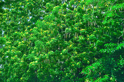 Tibit Tree Poster