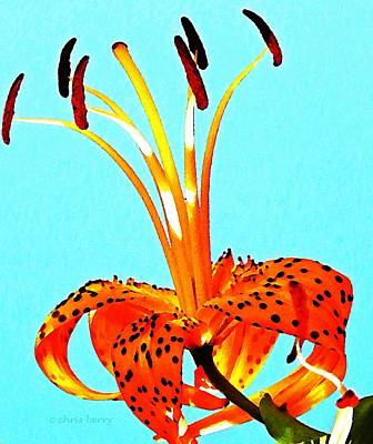 Turquoise And Tiger Lily Poster
