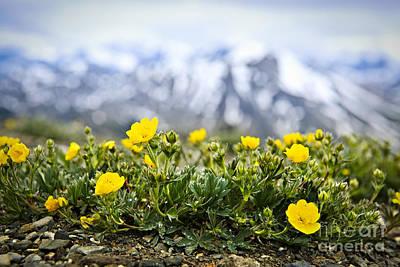 Alpine Meadow In Jasper National Park Poster