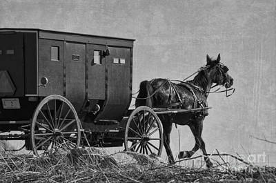 Amish Buggy Black And White Poster