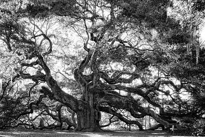 Poster featuring the photograph Angel Oak by Lynne Jenkins