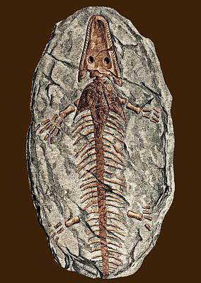Archegosaurus Decheni, Amphibian Fossil Poster