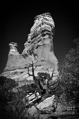 Arches National Park Bw Poster by Larry Carr