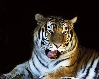 Awaking Tiger Poster