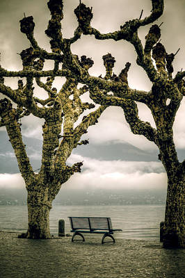 Bench Under Plane Trees Poster by Joana Kruse