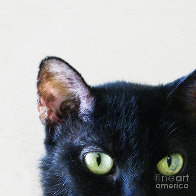 Black Cat Green Eyes Poster by Glennis Siverson