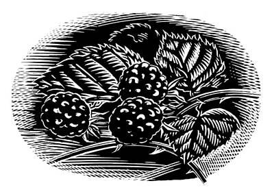 Blackberries, Woodcut Poster by Gary Hincks