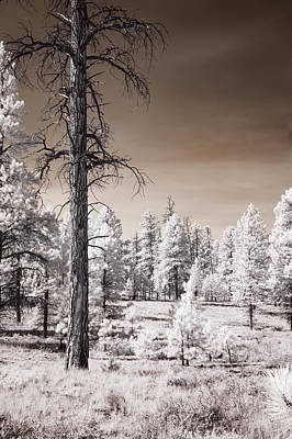 Poster featuring the photograph Bryce Canyon Infrared Trees by Mike Irwin