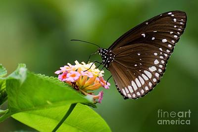 Poster featuring the photograph Butterfly by Fotosas Photography