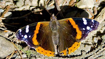 Butterfly Poster by LeeAnn McLaneGoetz McLaneGoetzStudioLLCcom