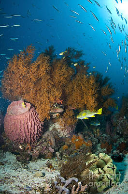Colorful Reef Scene With Coral Poster