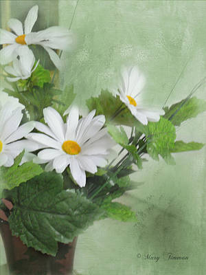 Poster featuring the photograph Daisies by Mary Timman