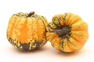 Decorative Squash Poster by Ted Kinsman