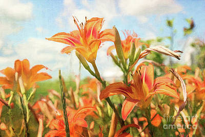 Digital Painting Of Orange Daylilies Poster