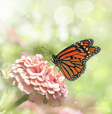 Dreamy Monarch Butterfly Poster
