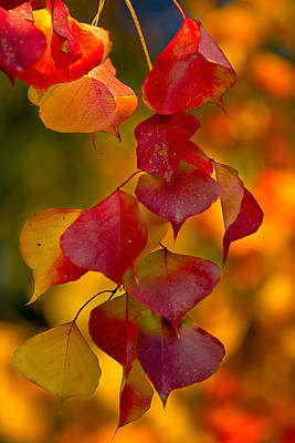 Poster featuring the photograph Fall Color 1 by Dan Wells