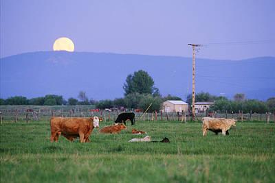 Farm Scene West Of Chiloguin, Oregon Poster