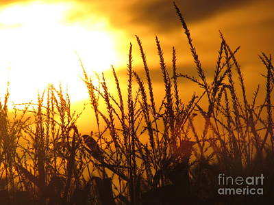 Poster featuring the photograph Farming Sunset by France Laliberte