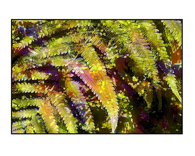 Poster featuring the photograph Fern In Dappled Light by Judi Bagwell