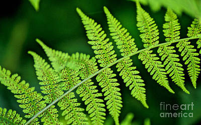 Fern Seed Poster by Sharon Elliott