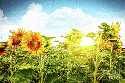 Field Of Colorful Sunflowers/digital Painting   Poster by Sandra Cunningham