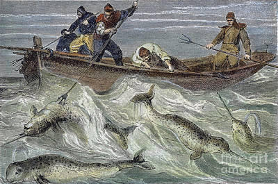 Fishing For Narwhals Poster