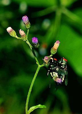 Flower Fly Poster by Arik S Mintorogo