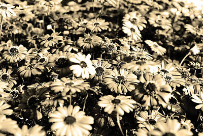 Flowers In Sepia Tone Poster by Sumit Mehndiratta