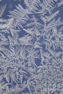 Frost On A Window Poster by Ted Kinsman