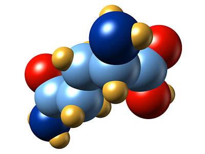 Glutamine, Molecular Model Poster by Dr Mark J. Winter