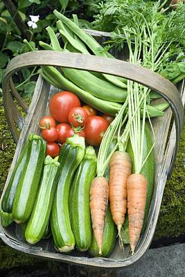 Home-grown Organic Vegetables Poster by Sheila Terry