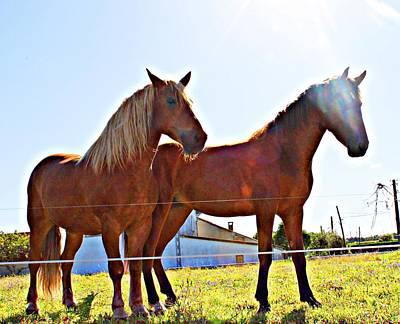 Horses Poster by Jenny Senra Pampin