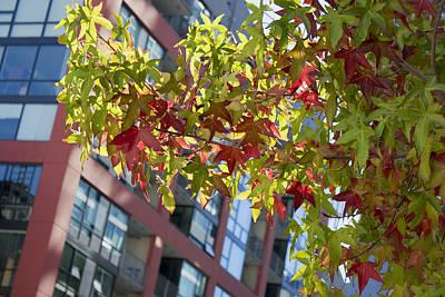 Inner City Autumn Poster