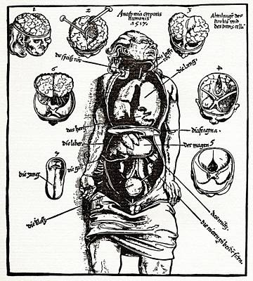 Internal Anatomy, 16th Century Diagram Poster by Sheila Terry