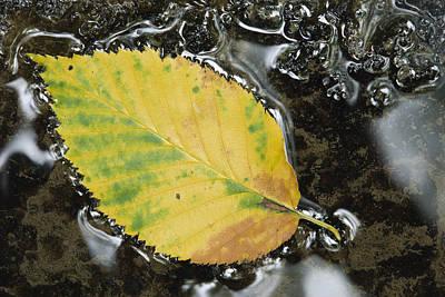 Leaf In Water, Niagara Peninsula Poster