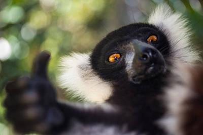 Lemur Expresion Poster