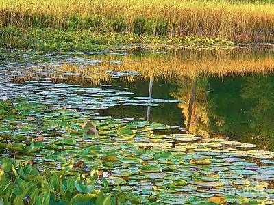 Lily Pads On The Lake Poster by Joyce Kimble Smith