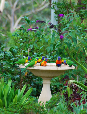 Lorikeets And Rosellas Poster
