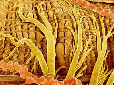 Moth's Interior, Sem Poster