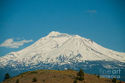 Mount Shasta Poster by Carol Ailles
