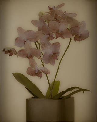 Orchid Poster by James Bethanis