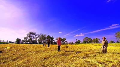 Poster featuring the photograph Paddy Field by Arik S Mintorogo