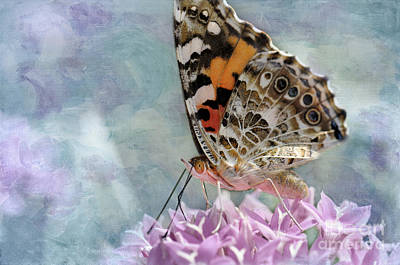 Painted Lady Butterfly Poster by Betty LaRue