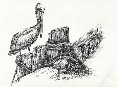 Pelican At Dockside Poster