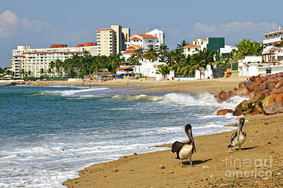 Pelicans On Beach In Mexico Poster